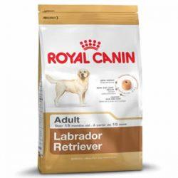 Labrador Royal Canin
