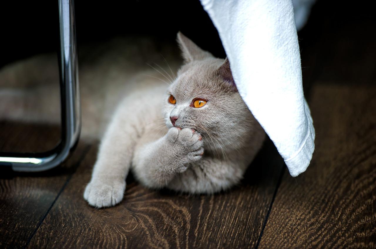 7 motivi per cui il tuo gatto non usa più la lettiera