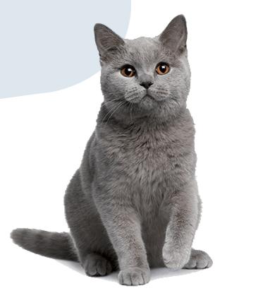 Prolife gatto