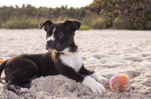 Consigli pratici per portare il proprio cane in spiaggia
