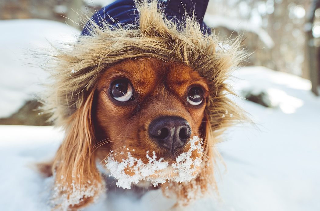 proteggere-i-cani-in-inverno