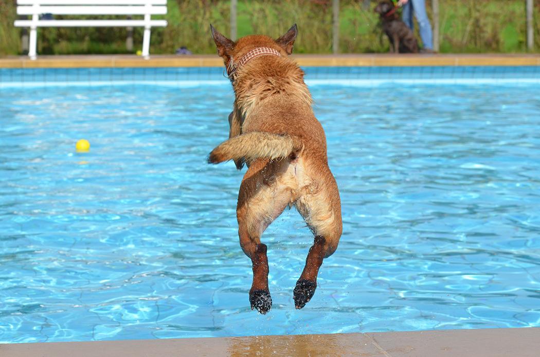 piscina per cani e gatti